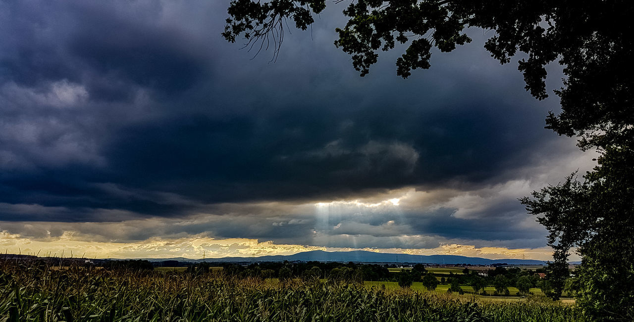 nature, cloud - sky, field, sky, beauty in nature, dramatic sky, tranquility, weather, storm cloud, landscape, scenics, tree, tranquil scene, growth, outdoors, no people, agriculture, rural scene, day, thunderstorm