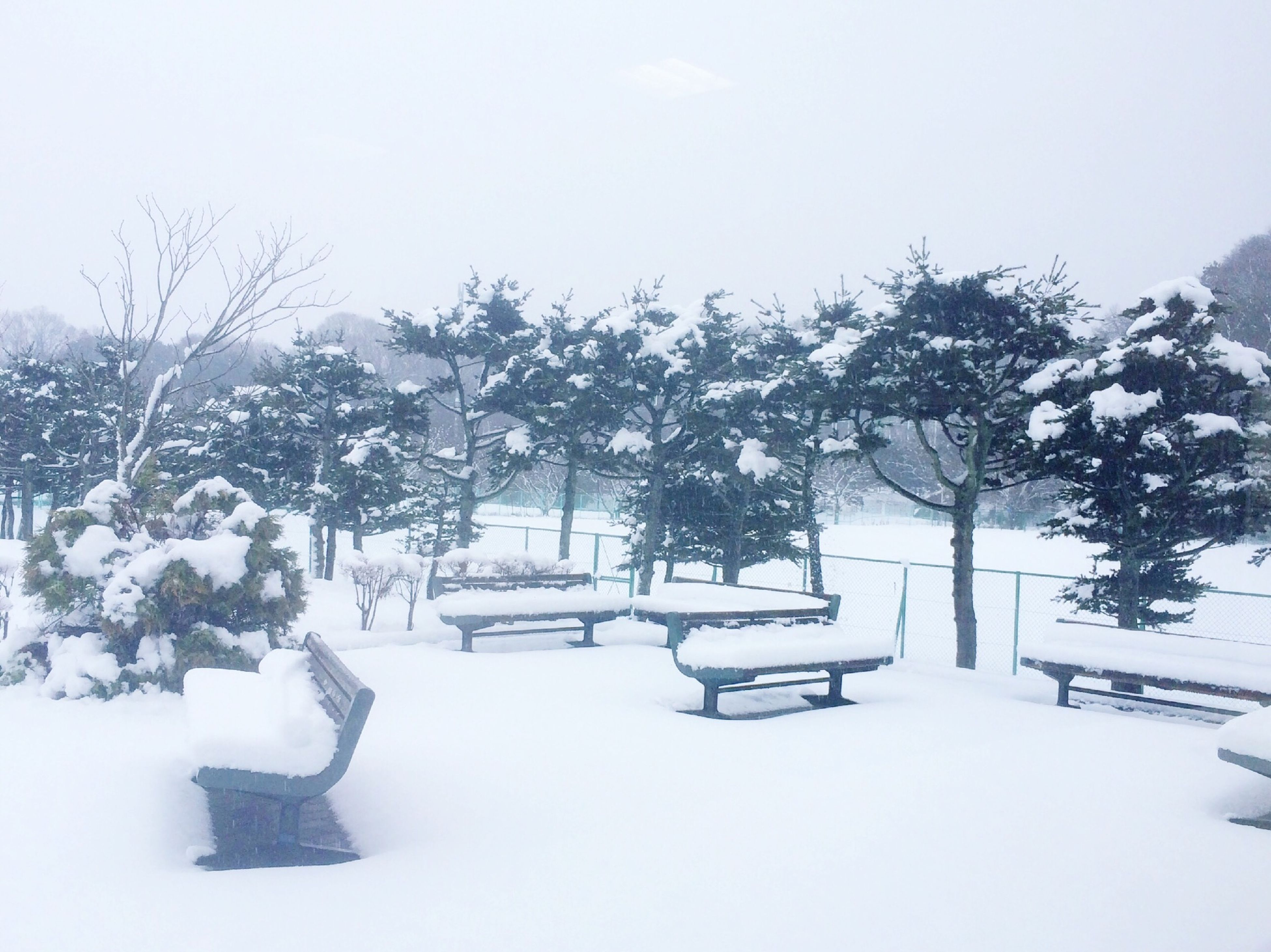 snow, winter, cold temperature, season, weather, tree, covering, tranquility, tranquil scene, nature, clear sky, white color, landscape, covered, field, frozen, beauty in nature, scenics, snow covered, day