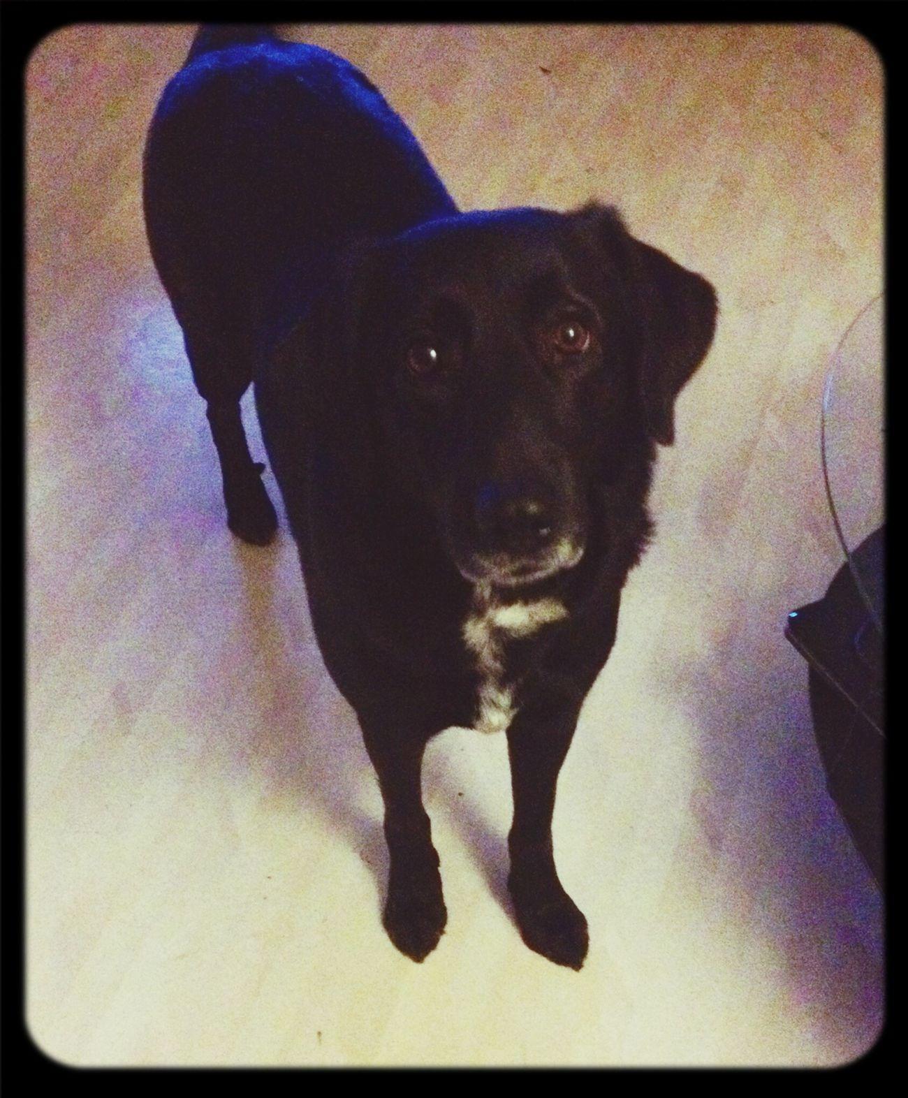Min bästa vän ❤️  Dog Love