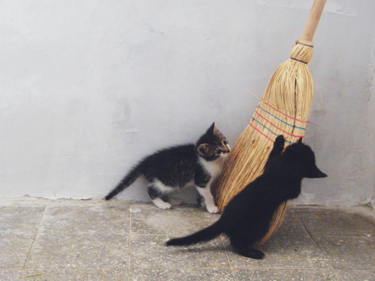 Beautiful stock photos of baby katzen, Animal Themes, Broom, Cleaning Equipment, Day
