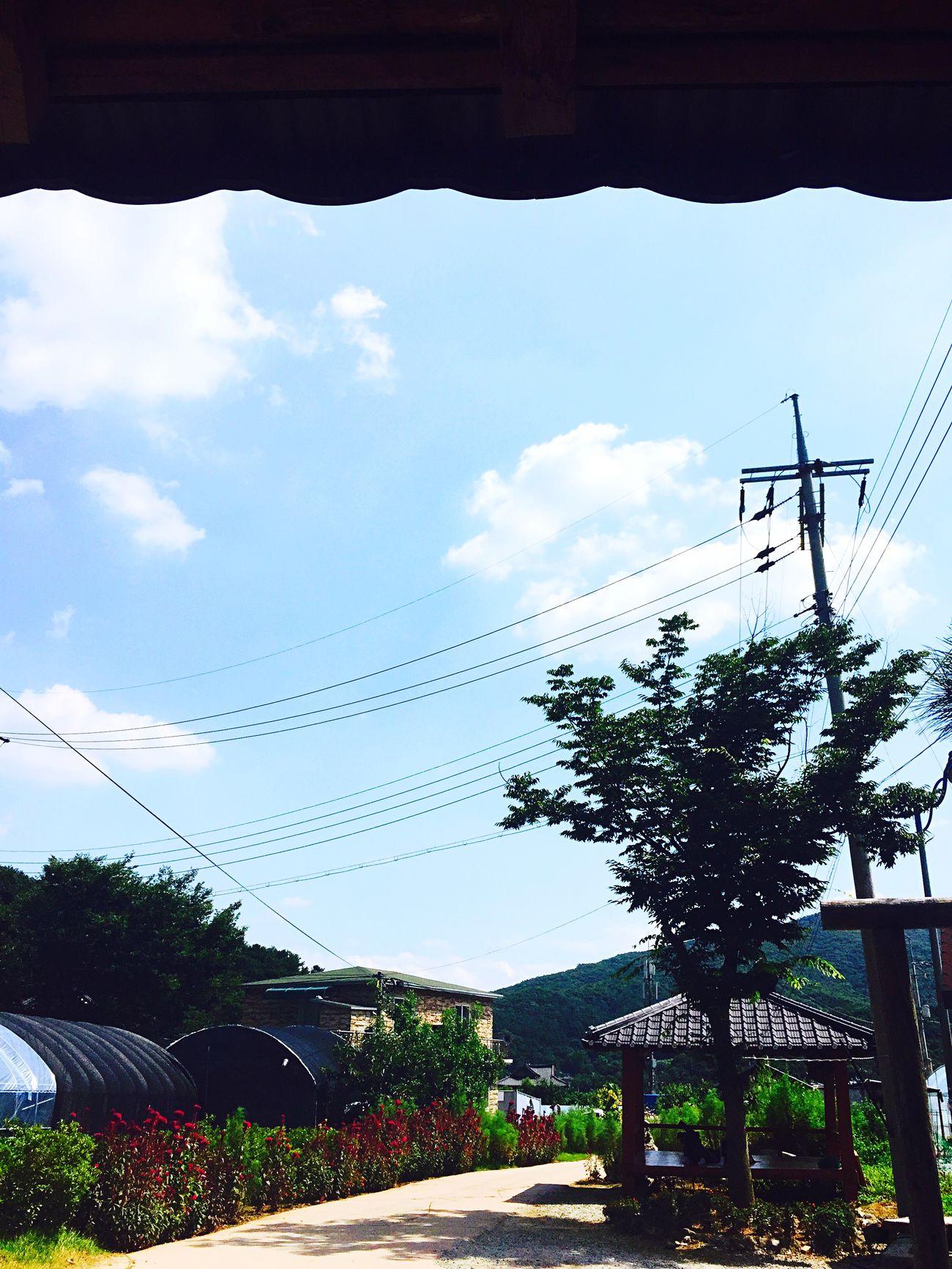 농활 🌱impact농생대•날씨 좋음• Hknu Plant