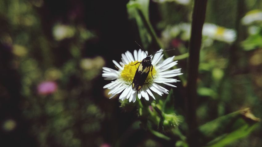 Flower Insect One Animal Nature Animals In The Wild Plant Growth Focus On Foreground Flower Head Petal Day Animal Themes Animal Wildlife Beauty In Nature No People Close-up Sunny Day☀ Beauty In Nature Beautiful Nature Beauty In Nature ❤️❤️ Bugsandflowers Green Color