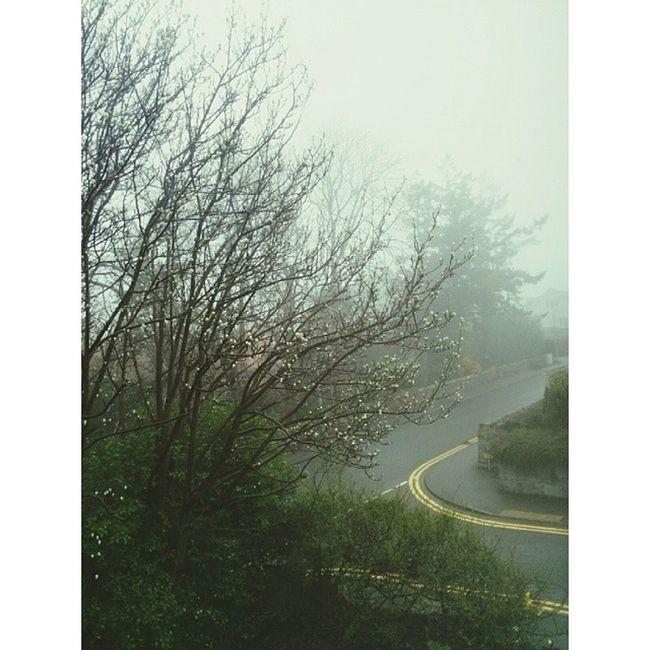 Such a horrible day :( ☔☁? Horribleday Depressing Jj  Jj_forum foggyday