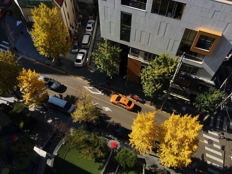 Tree City Road Building Exterior Trees Autumn Colors Taxi