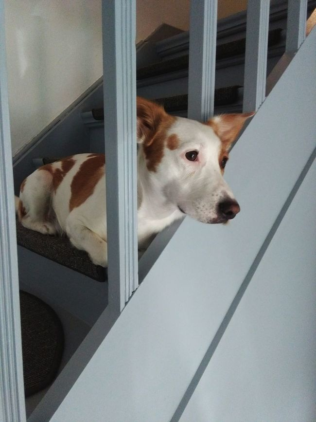 Dog Upstairs Tiere Handyphoto Relaxing Look Out The Window