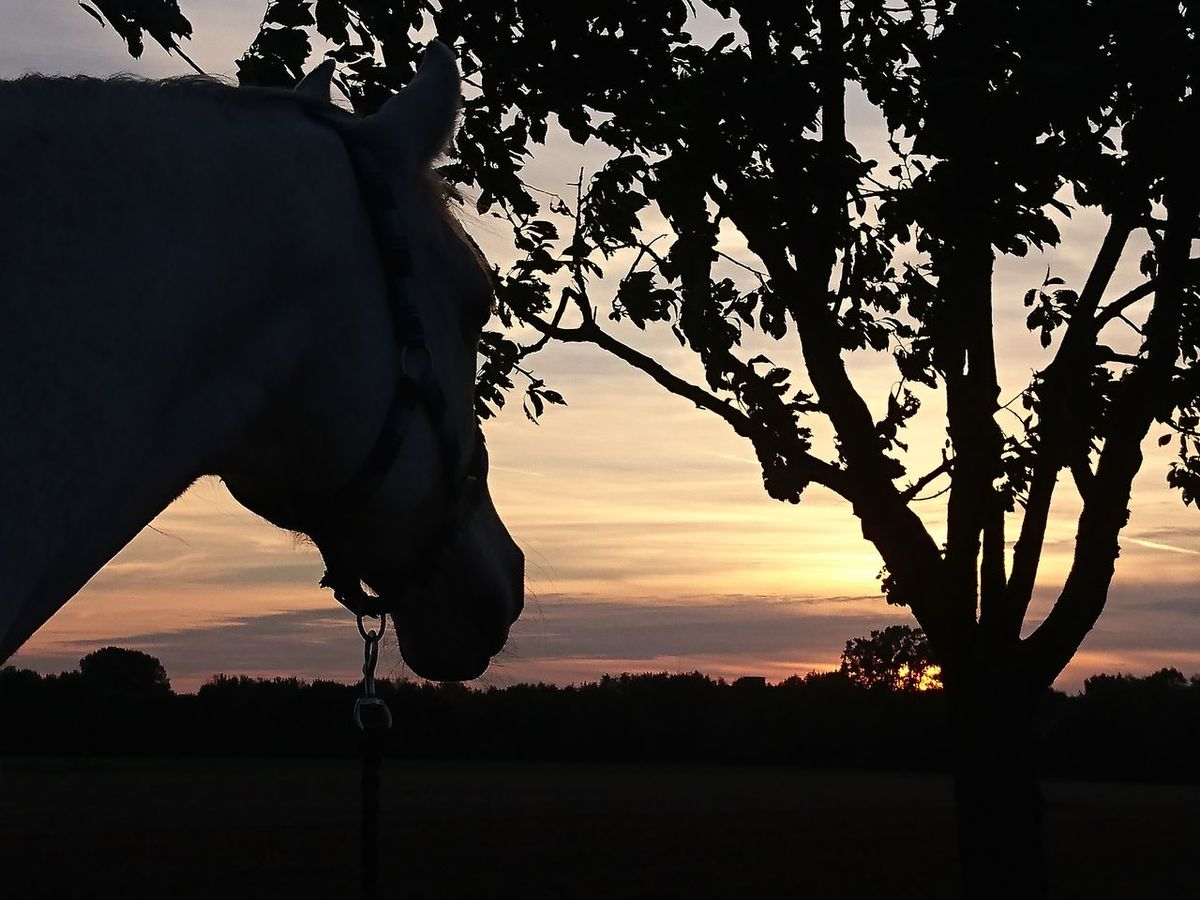 Nature No People Pure Photography Light And Darkness  Silhouette Sunset Landscape Enjoy The View Gerasdorf Horse Sunset Silhouette Tree Beauty In Nature Austria Taking Photos sunset #sun #clouds #skylovers #sky #nature beautifulinnature naturalbeauty photography landscape [ Sunset Lovers Horse Silhouette Outdoors Sky