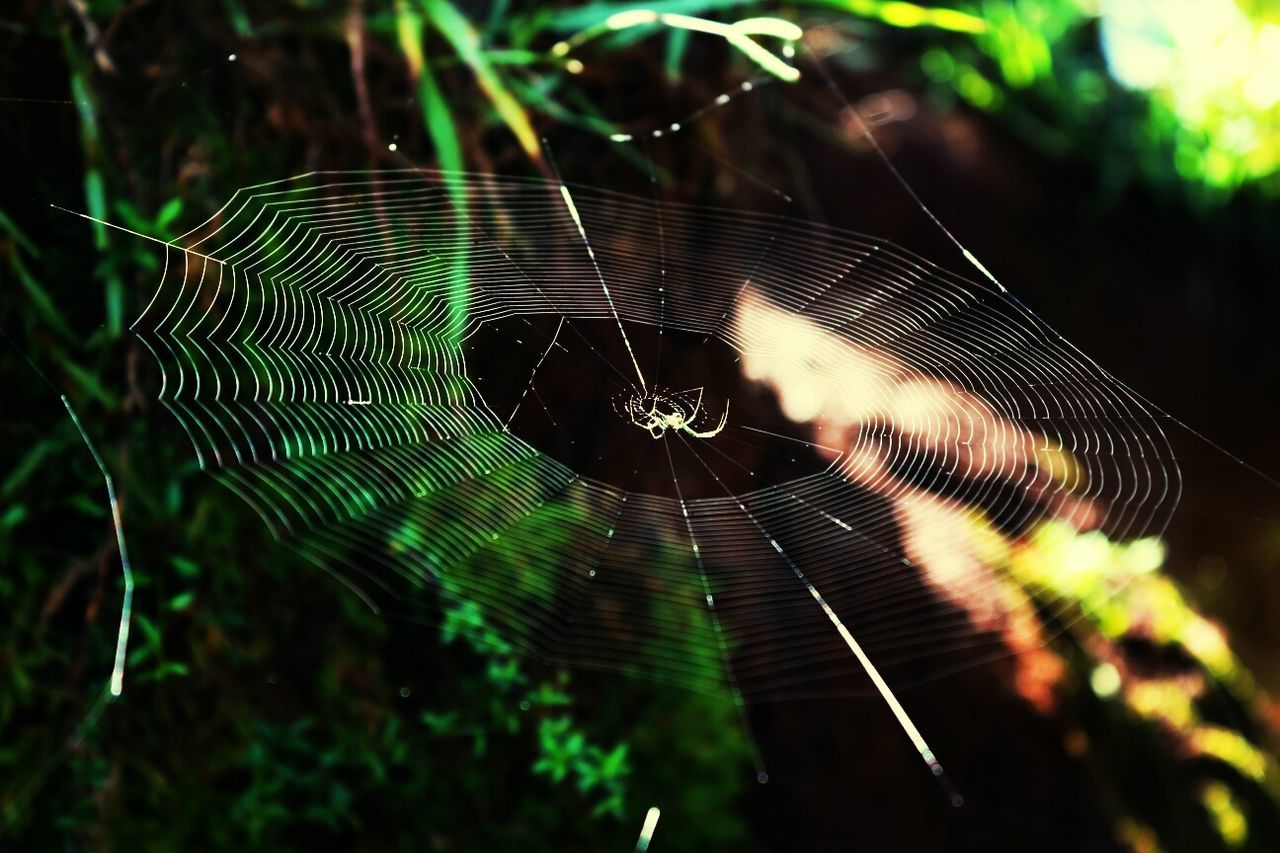 A good friend ;P Spider Web WEBS Insects  Arachnid