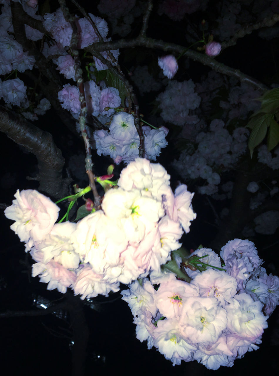 Beauty In Nature Blooming Bouquet Close-up Day Florist Flower Flower Head Flower Shop Fragility Freshness Growth Hydrangea Leaf Nature Night No People Outdoors Petal Plant Sakura