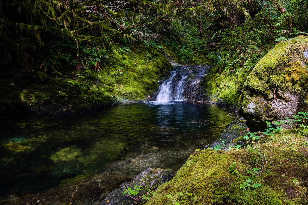 Waterfall at the End of the Water Pool Beauty In Nature Day Green Color Growth Idyllic Nature Nile Creek No People Outdoors Reflection River Scenics Tranquil Scene Tranquility Tree Water Waterfall Waterfront