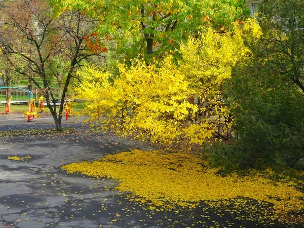 Tree Outdoors Yellow Day Nature Beauty In Nature City View  No People Reflections And Shadows Reflect Leaves And Branches Leaves Autumn Colors Autumn Autumn Leaves