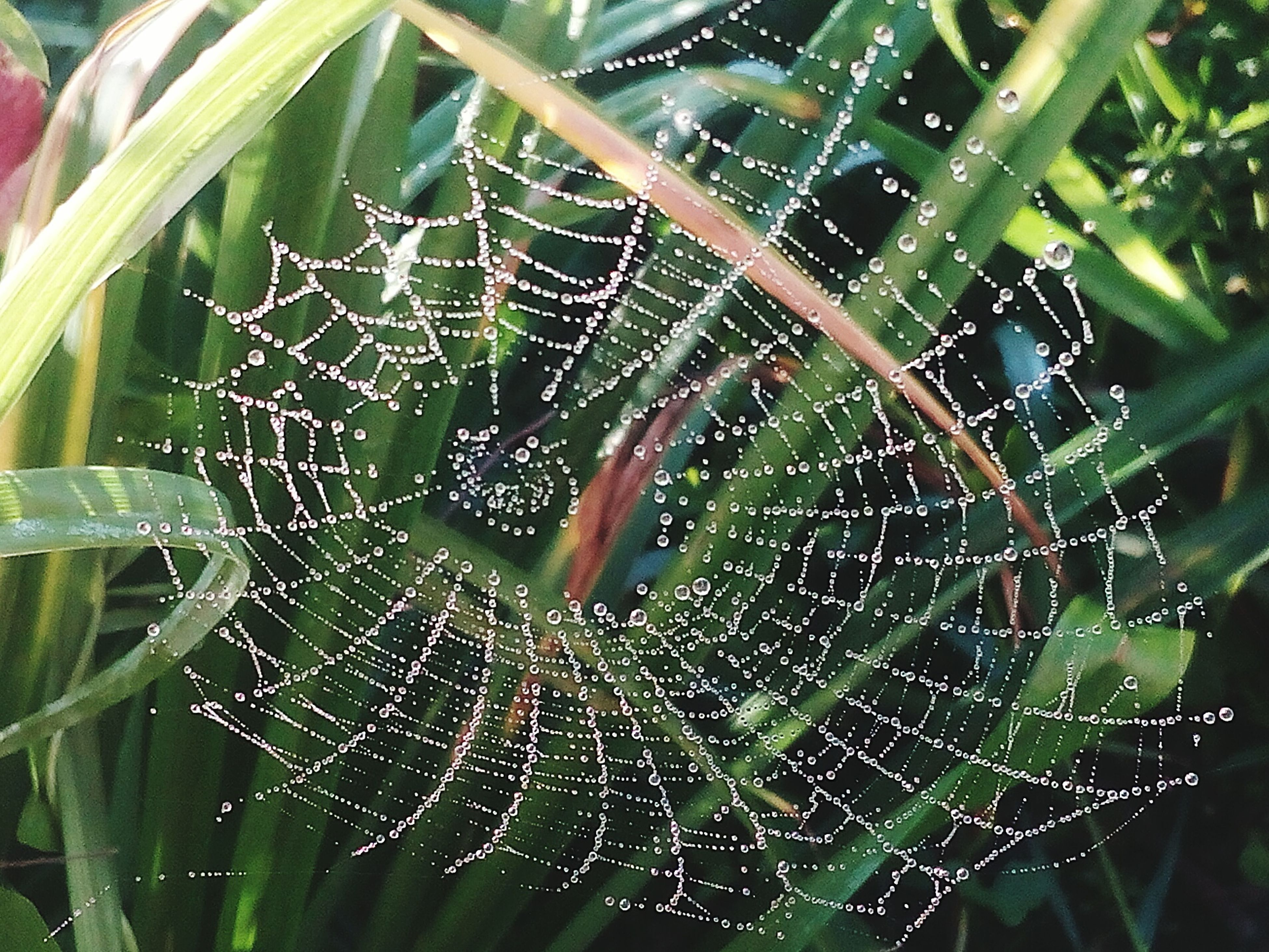spider web, fragility, focus on foreground, close-up, water, dew, nature, natural pattern, web, beauty in nature, plant, complexity, outdoors, growth, day, selective focus, no people, tranquility, detail