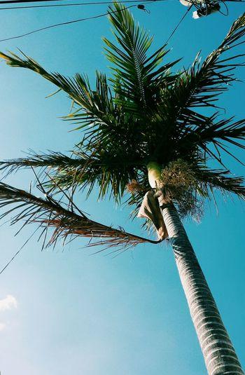 Palmtree Blue Sky