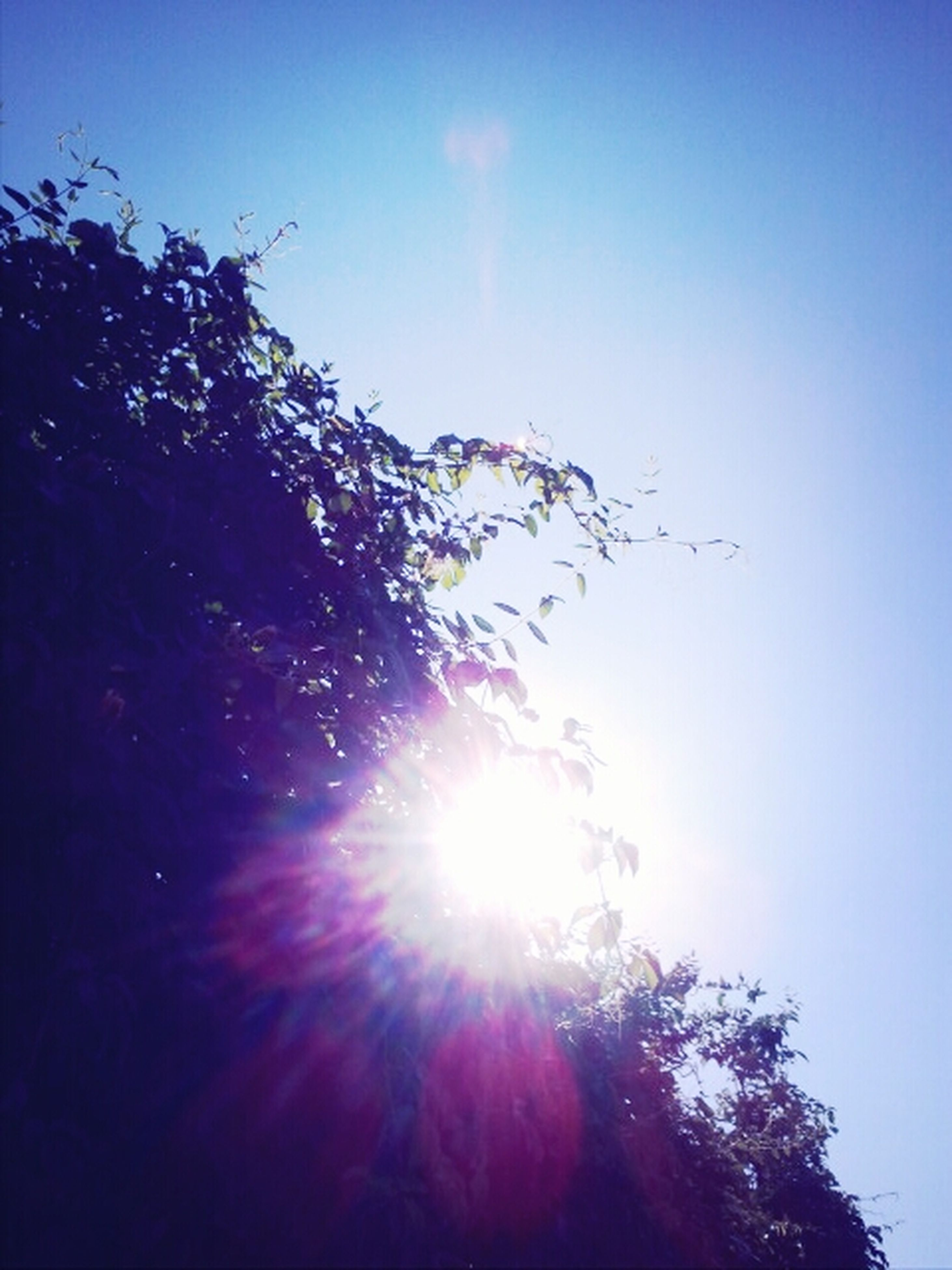 sun, low angle view, tree, clear sky, sunlight, sunbeam, lens flare, blue, beauty in nature, growth, nature, tranquility, sky, bright, sunny, scenics, tranquil scene, branch, silhouette, outdoors