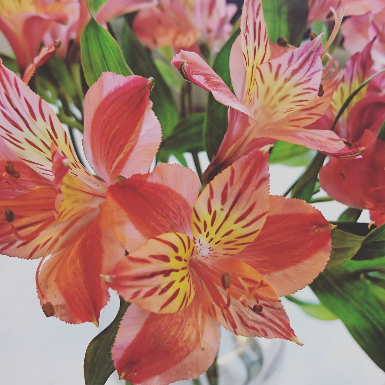 Beauty In Nature Nature Flower No People Fragility Close-up Petal Flower Head Plant Growth Freshness Pink Color Springtime Day Day Lily Pistil
