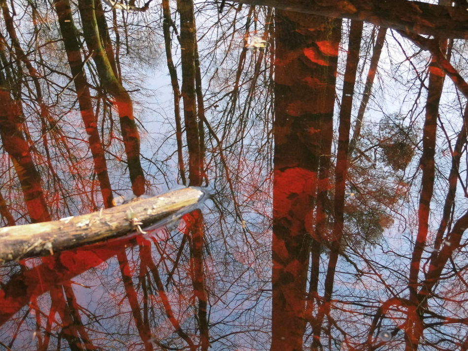 Forest Red Water Rotes Wasser Such Wow Much Fu Wald Waldspaziergang Water Wood