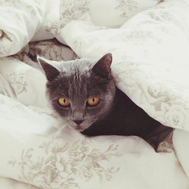 мимимишность Cat Mimimi Hello World Hi! Relaxing Masandra