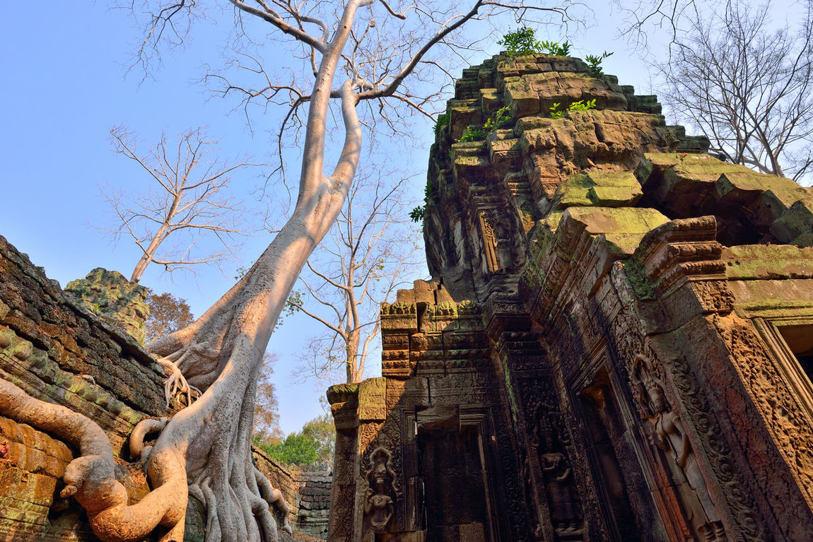 Ta Prohm in Angkor Wat, Cambodia. Ancient Angko Wat Architecture Cambodia Cultures Day Low Angle View No People Outdoors Place Of Worship Religion Siem Reap Sky Ta Prohm Tree