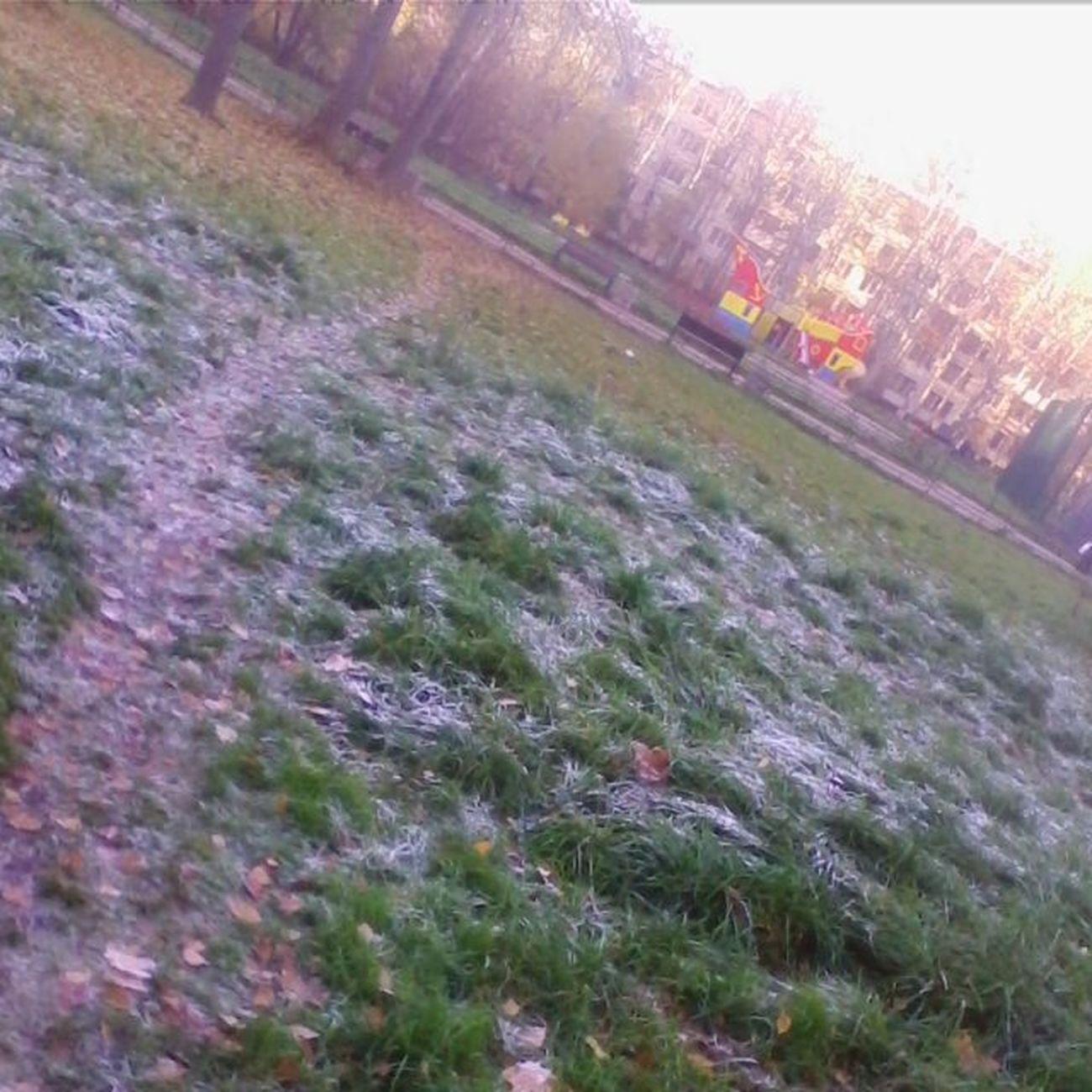 Легкий снег в Питере Snowinstpetersburg Autumm Grass Light snow in St. Petersburg Snowinstpetersburg Autumm Grass Likeboxsaratov