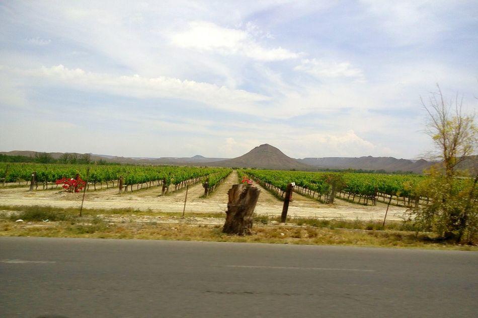 Trip to Parras Coahuila where Casa Madero wine is made.Agriculture Nature Parrasdelafuente Parras Green Color No People No Filter Mexico Coahuila Sky Mountain Mountain Range Grapefruit Grapevine