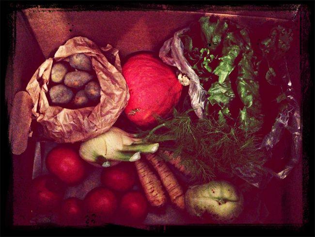 neue Gemüsekiste