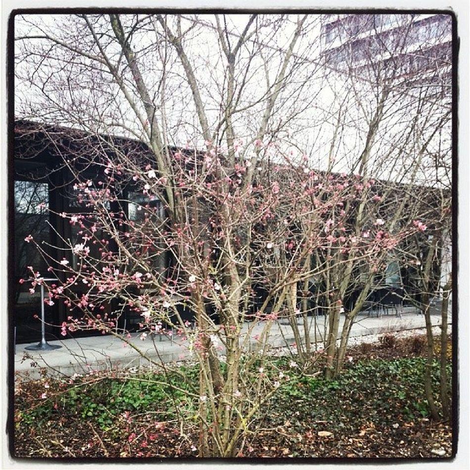 Frühling. . Springinjanuary Vielzufrueh Winter2014 Hiergradso fromwhereistand
