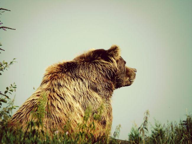 Grizzly Bear EyeEm Nature Lover Bestoftheday EyeEmBestPics Shotoftheday Check This Out Bestshot My Favorite Photo EyeEm Masterclass
