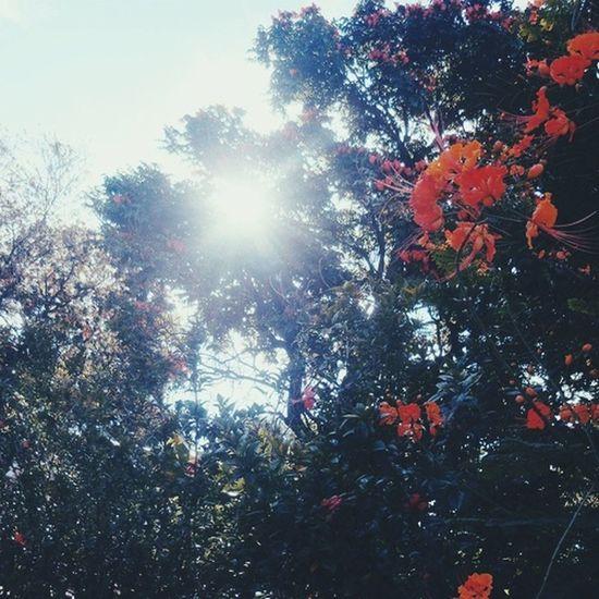 EyeEm Nature Lover Sun ☀