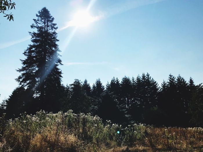 Tree Growth Nature Sunlight Tranquility No People Day Tranquil Scene Beauty In Nature Outdoors Sun Scenics Landscape Sky Clear Sky Grass Oregon The Week On EyeEm