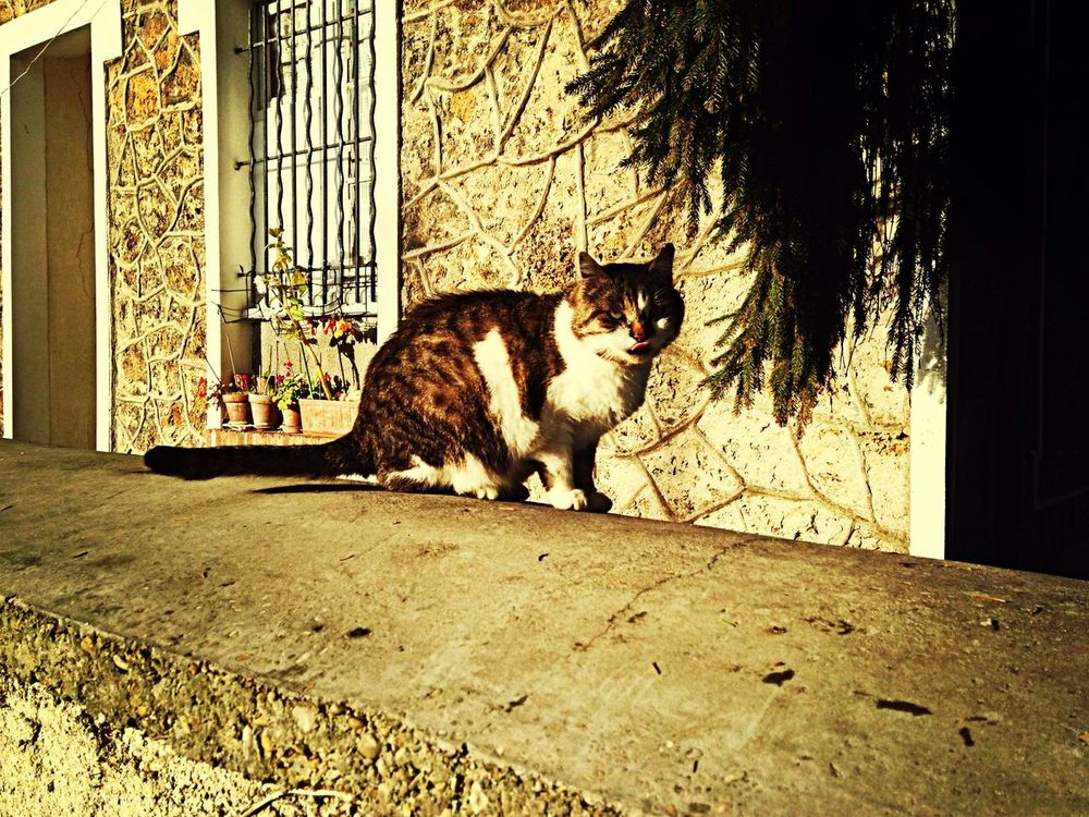 Hanging Out Hello World Taking Photos Enjoying Life Cat Relaxing Urban Escape Animals France Check This Out