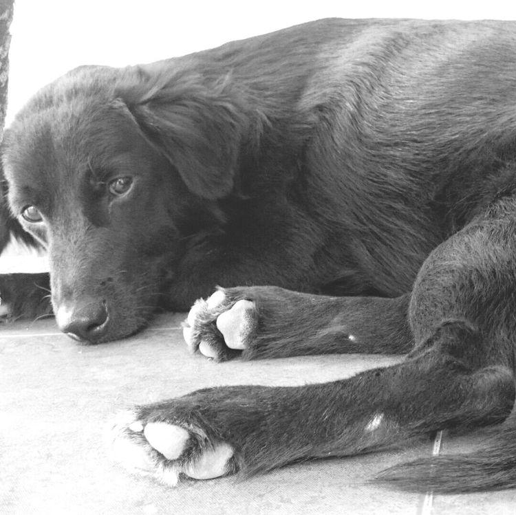 hello... Kintamani Dog Ilovemydog Weeko Bali