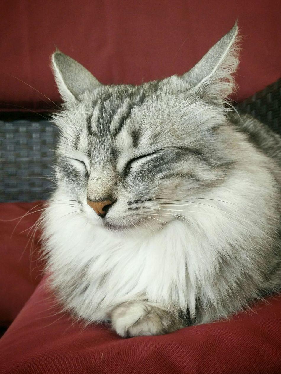 Beautiful stock photos of eyes, Animal Head, Animal Themes, Cat, Close-Up