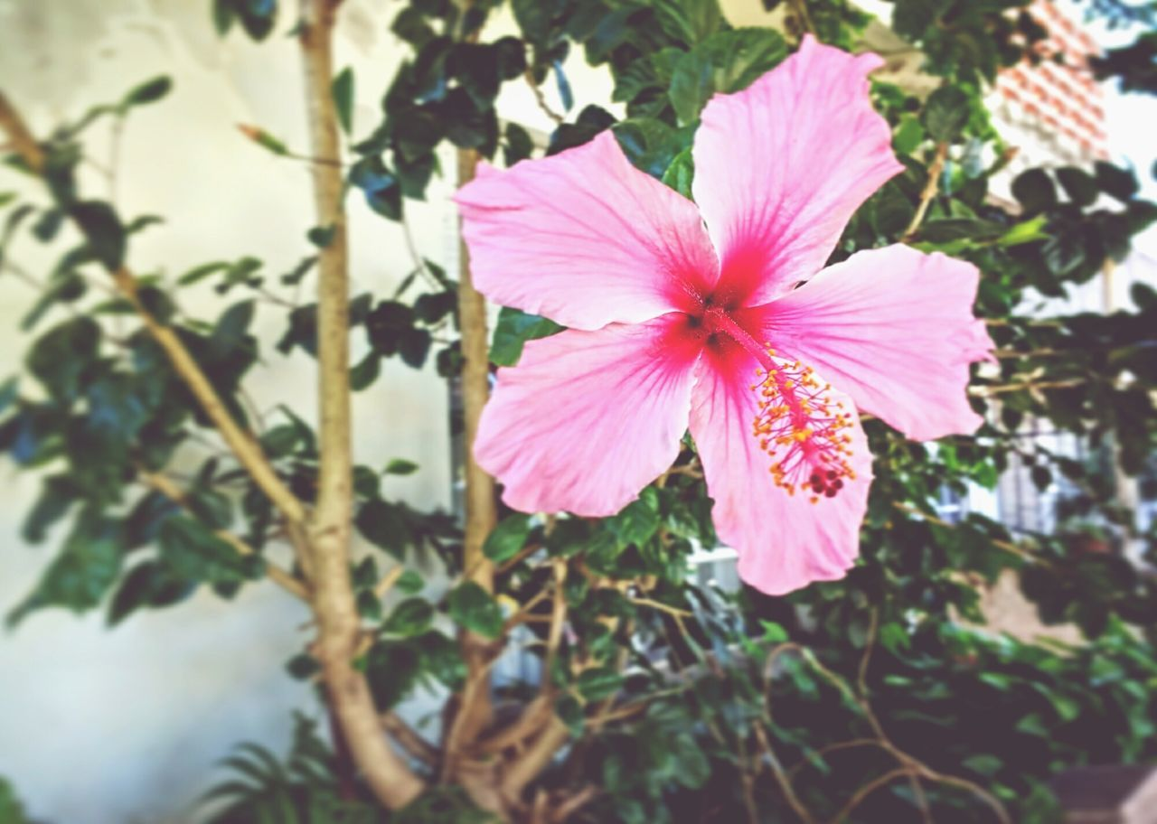 Listen to what they say, you nay learn something Flower Pink Color Fragility Petal Flower Head Nature Beauty In Nature Outdoors Day No People Petunia Plant Freshness Alternative Simple Sky Relaxation Learn Pink Amateur