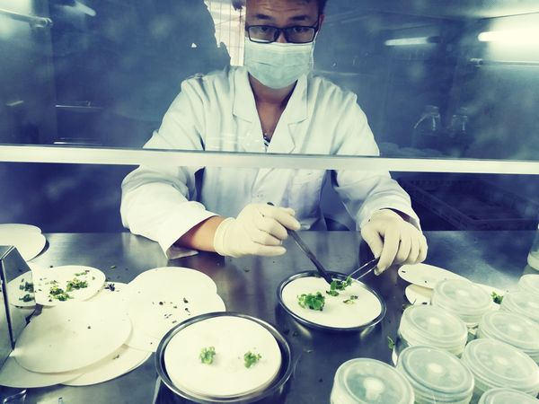Research Research Project Research Center Research Station Research And Development Researcher Tissueculture Tissue Culture Zhengzhou,china
