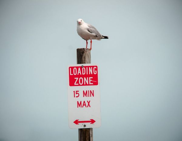 Cheese! Bird Warning Sign Australia Loading Zone Minutes Animal Portrait Animal & Animal Thursday Island Color Design Space Textures And Surfaces Australia & Travel Animals Muster Mix My Eyes My Australia Things I Like From My Point Of View Travel Typo Around The World