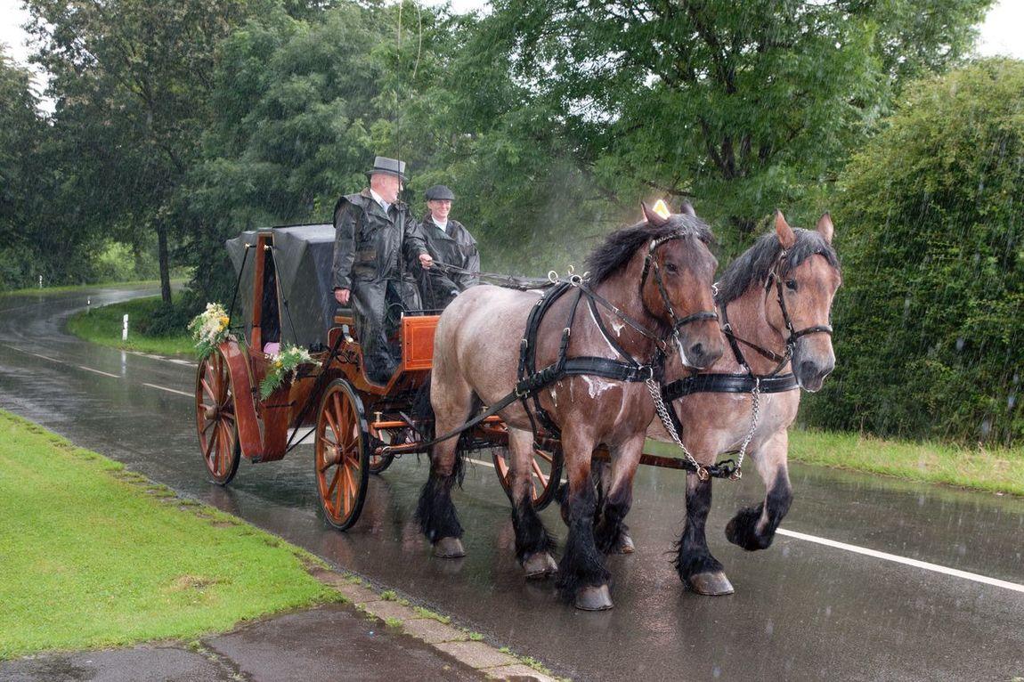 Hochzeitskutschfahrt Wedding Wedding Photography Wedding Day Rainy Rainy Day Horses Rain Hochzeitsfotografie Kutschfahrt Kutsche Pferde Regen Hochzeitskutsche