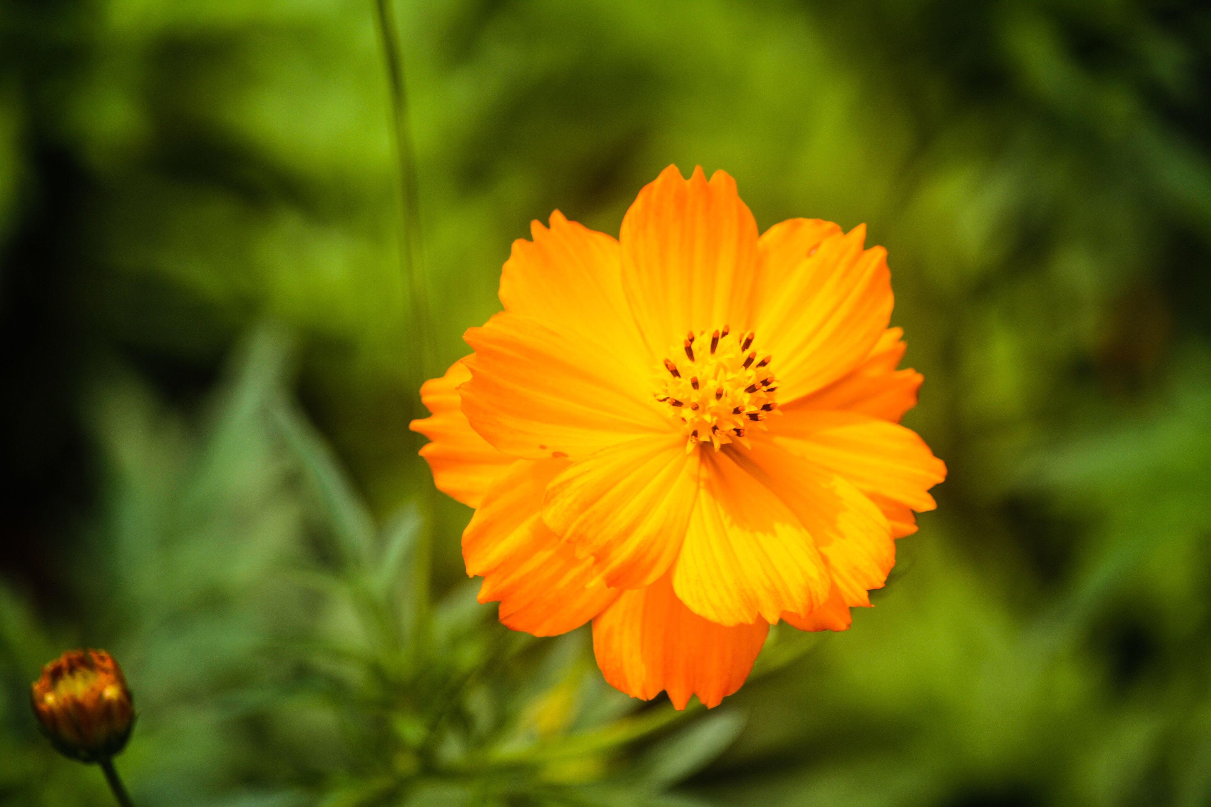 flower, petal, freshness, flower head, fragility, growth, beauty in nature, focus on foreground, close-up, yellow, pollen, blooming, orange color, nature, plant, in bloom, day, stamen, no people, outdoors, blossom, selective focus, botany, green color, tranquility