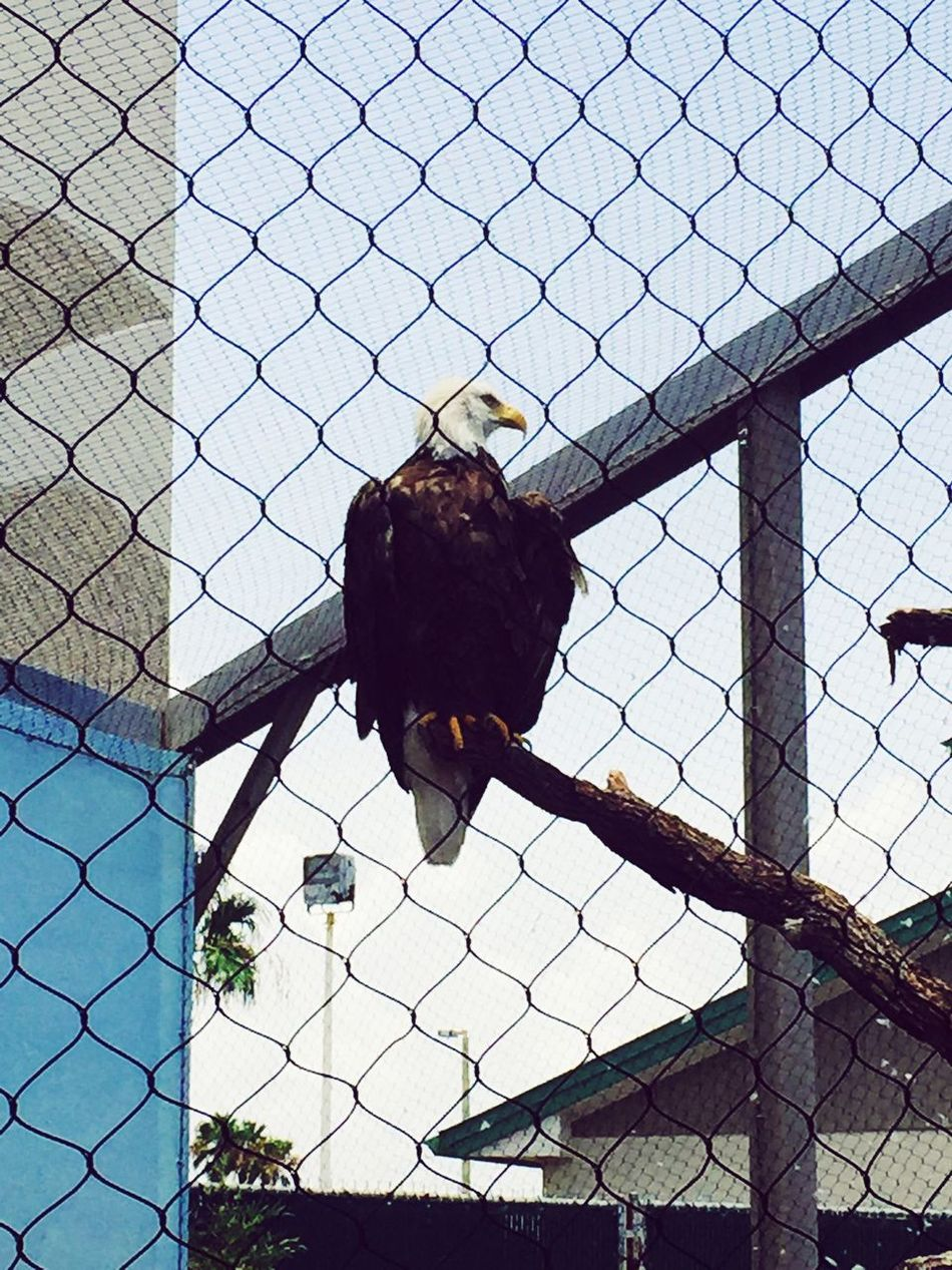 #Eagles Freebigbird Don't LokkAtMe Nature