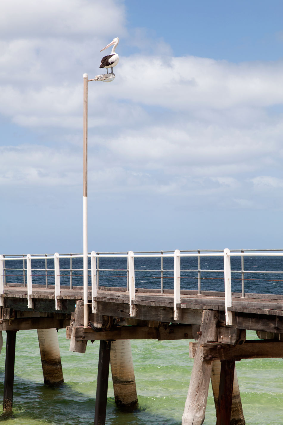 Pelican perched above a pier Australian Bird Australian Pelicans Australian Wildlife Beach Photography Clear Water Cloud - Sky Day Landscape Man And Nature Man Made Structure Nature No People Outdoors Pelican Pelican Perching Perfect Day Pier Railing Sea Sky Water Water Bird Wharf