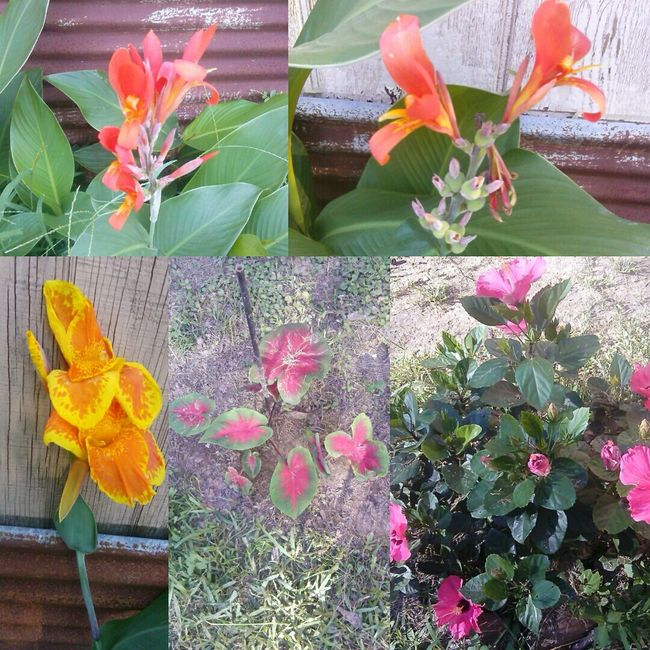 Flower Collection.....My Flowers