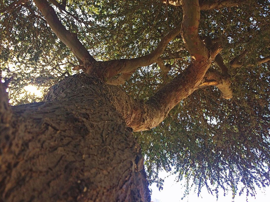 Angulo Tree árbol Enfoque Beauty In Nature EyeEmNewHere The Week On EyeEm Your Ticket To Europe Mix Yourself A Good Time