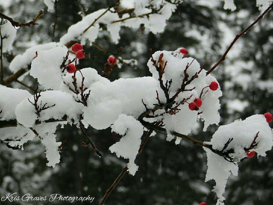 EyeEm Nature Lover Hello World Hi! Snow ❄ Winter Wonderland Canmore