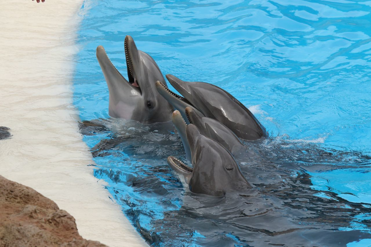 Animal Themes Animals In The Wild Blue Delfin Delfine Dolphin Dolphin Watching  Dolphins DolphinShow Fish High Angle View Sea Life Swimming Swimming Pool Water Wildlife
