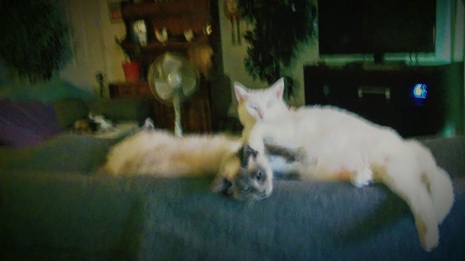 Always Be Cozy Blurred Motion Indoors  Pets Domestic Animals One Animal Togetherness Friendship Happiness No People Animal Themes cats pets felines