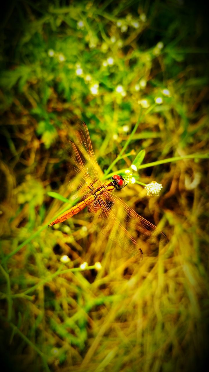 insect, one animal, animals in the wild, animal themes, selective focus, nature, no people, close-up, outdoors, growth, day, full length, grass