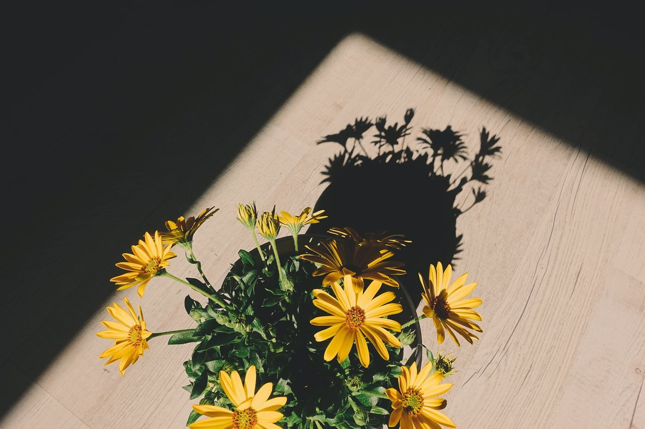 Flower Flowers Flower Head Shadow Light And Shadow Sunlight Lifestyles Life Enjoying The Sun Yellow Yellow Flower Daisy Blooming Geometric Shape Sunset Sunshine High Angle View Indoors  Close-up Nature Plant Growth Freshness Leaf Enjoying Life BYOPaper! Live For The Story