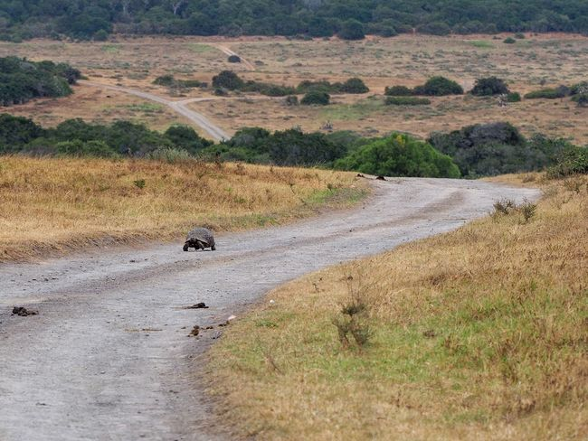 Slow on a highway Safari Kariega Safari Turtle Nature Walking Outdoors No People