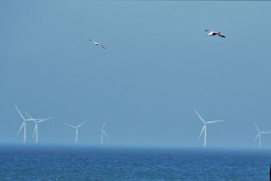 Wind Turbines in the haze Alternative Energy Animal Themes Clear Sky Day Electricity  Environmental Conservation Fuel And Power Generation Industrial Windmill Nature No People Outdoors Power In Nature Renewable Energy Sea Sky Water Wind Power Wind Turbine Windmill Windturbines EyeEmNewHere
