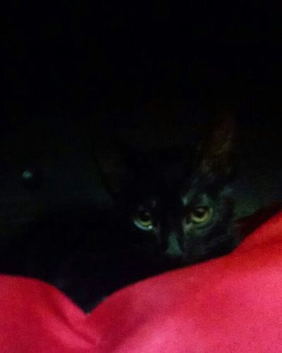 Cat♡ Cat House Resting Check This Out Black Cat