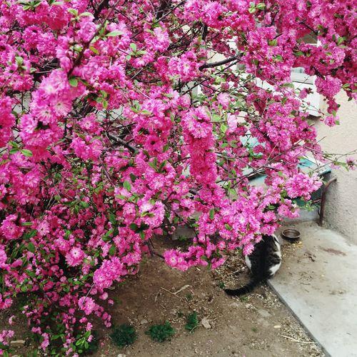 Flower Pink 🐈