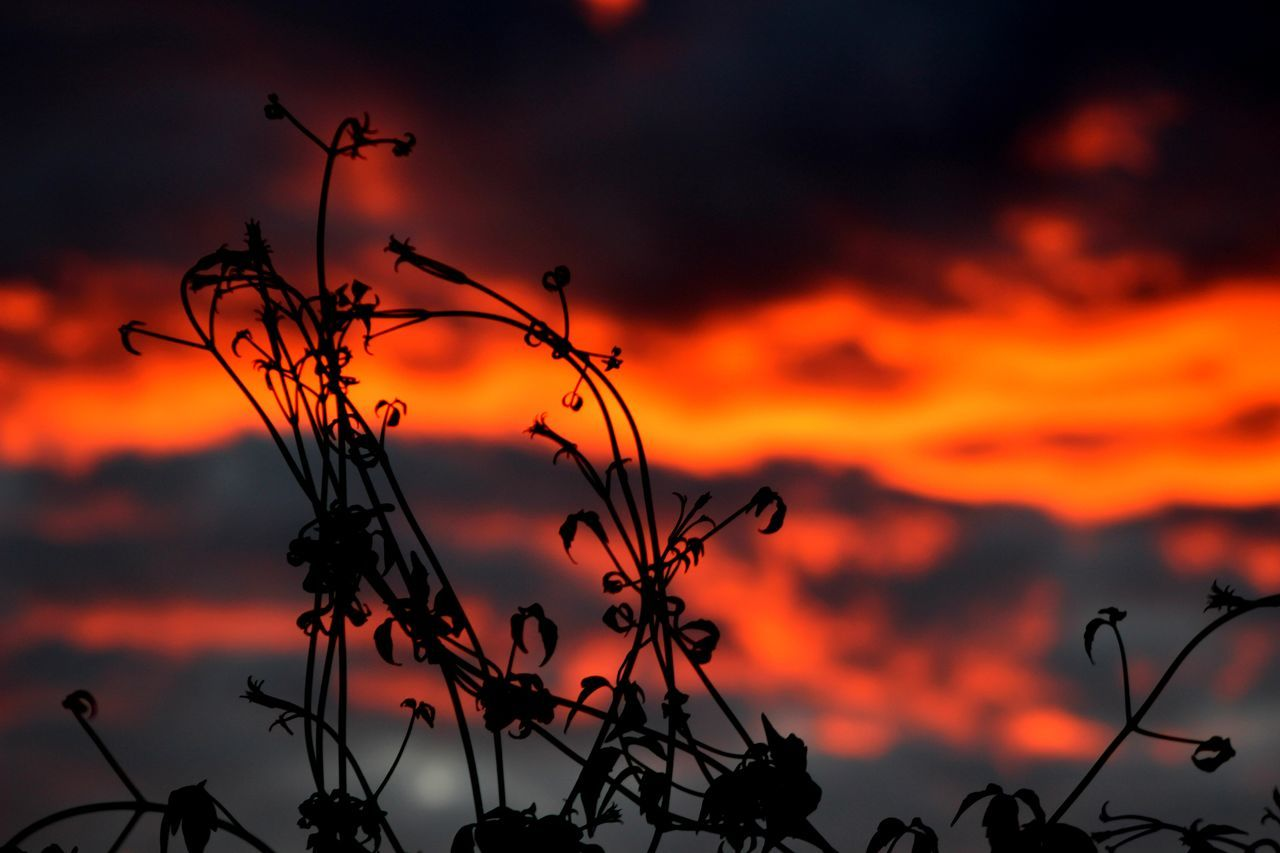 Beauty In Nature Cloud - Sky Dramatic Sky Dusk Sky My Back Garden Nature Orange Color Sky Sunset Tranquility The Sky Is Burning